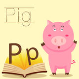 Illustrator of P for Pig vocabulary Stock Photos