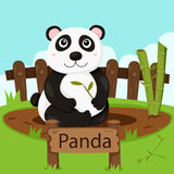 Illustrator of Panda in the zoo Stock Images