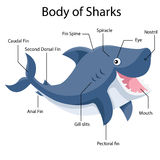 Illustrator Parts of Sharks Stock Photography