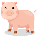 Illustrator of pig cute vector Stock Photos