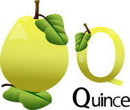 Illustrator Q font with quince Stock Photo