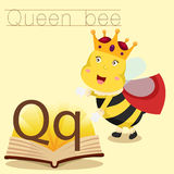 Illustrator of Q for Queen bee vocabulary Vector Illustration