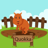 Illustrator of Quokka in the zoo Royalty Free Stock Images