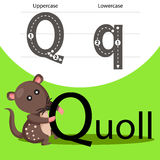 Illustrator of quoll with a font Royalty Free Stock Images