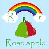 Illustrator of R alphabet. Font Stock Photos