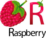 Illustrator r font with raspberry Stock Image