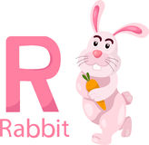 Illustrator of R with Rabbit Stock Photo