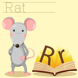 Illustrator of R for Rat bee vocabulary. Illustrator of R for Rat vocabulary stock illustration