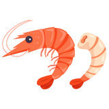 Illustrator of shrimp. Animal and cooking stock illustration