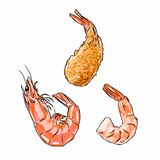 Illustrator of shrimp in shell, without shell and fried vector isolated Stock Photography