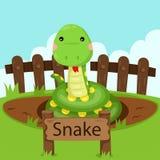 Illustrator of snake in the zoo Stock Photo