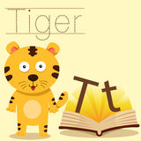 Illustrator of T for Tiger vocabulary Royalty Free Stock Image