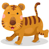 Illustrator of tiger cute vector Royalty Free Stock Photos