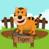 Illustrator of tiger in the zoo Stock Images
