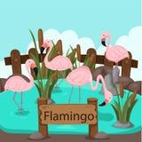 Illustrator van flamingo in de dierentuin vector illustratie