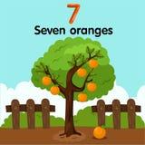 Illustrator van nummer zeven sinaasappelen stock illustratie