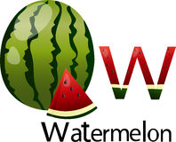 Illustrator w font with watermelon Stock Photo