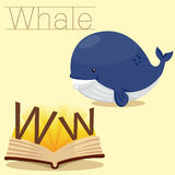 Illustrator of W for Whale vocabulary Royalty Free Illustration
