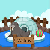 Illustrator of Walrus in the zoo Royalty Free Stock Photos