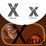 Illustrator of xerus with x font Royalty Free Stock Photography