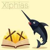 Illustrator of X for Xiphias vocabulary stock illustration