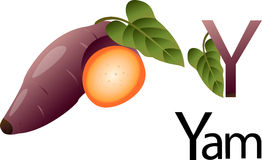 Illustrator y font with yam. Vegetables royalty free illustration