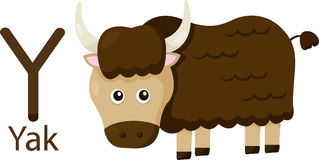 Illustrator of Y with yak. Vector font Y with yak Stock Photo