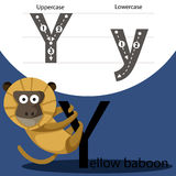 Illustrator of yellow baboon with y font Royalty Free Stock Images