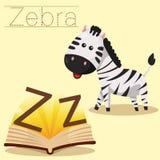 Illustrator of Z for Zebra vocabulary stock illustration