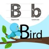 Illustratore dell'uccello con una fonte Immagini Stock Libere da Diritti