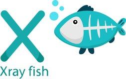 Illustratore della X con il pesce dei raggi x Illustrazione Vettoriale