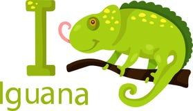 Illustratore della I con l'iguana Illustrazione di Stock