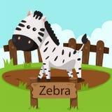 Illustratore della zebra nello zoo Fotografie Stock Libere da Diritti