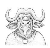 Illustrazione africana dell'incisione della Buffalo Immagini Stock Libere da Diritti