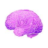 Illustrazione al neon del fumetto di un cervello umano con i punti culminanti e le ombre Vista laterale illustrazione di stock