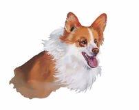 Illustrazione animale dell'acquerello del cane del pembroke del corgi di Lingua gallese isolata su fondo bianco Immagini Stock