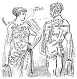 Illustrazione anotomical medica dello schema dell'annata Fotografia Stock Libera da Diritti