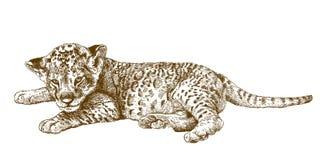Illustrazione antica dell'incisione del cucciolo di leone Fotografie Stock Libere da Diritti