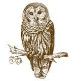 Illustrazione antica dell'incisione del gufo Fotografie Stock