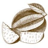 Illustrazione antica dell'incisione del mango Fotografie Stock