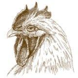 Illustrazione antica dell'incisione della testa del gallo Fotografie Stock Libere da Diritti
