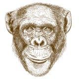 Illustrazione antica dell'incisione della testa dello scimpanzè Fotografia Stock