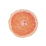 Illustrazione arancio Fotografie Stock Libere da Diritti