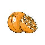 Illustrazione arancio di vettore su fondo bianco Fotografia Stock