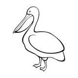 Illustrazione bianca nera dell'uccello del pellicano Fotografia Stock Libera da Diritti