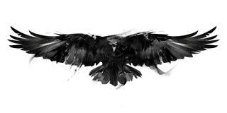 Illustrazione in bianco e nero isolata di una parte anteriore del corvo dell'uccello di volo royalty illustrazione gratis
