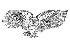 Illustrazione in bianco e nero originale del gufo Fotografie Stock Libere da Diritti