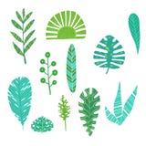 Illustrazione botanica di vettore della flora delle foglie di estate della giungla di verde di progettazione di monstera esotico  Fotografie Stock