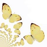 Illustrazione caleidoscopica delle farfalle Immagine Stock Libera da Diritti