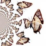 Illustrazione caleidoscopica delle farfalle Fotografia Stock Libera da Diritti